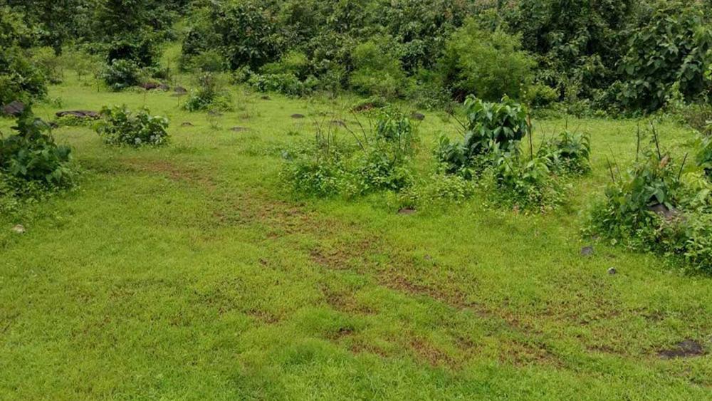 Maharashtra eyes land near Aarey for slum rehabilitation, environmentalists fume